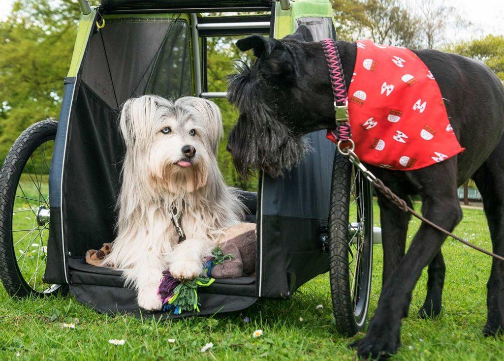 Dog XL von CROOZER (Fahrrad Anhänger) Outdoor